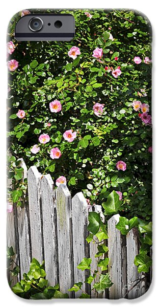 Gardening iPhone Cases - Garden fence with roses iPhone Case by Elena Elisseeva