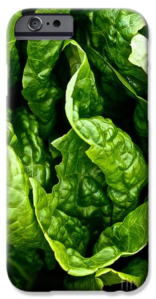 Garden Fresh iPhone Case by Susan Herber