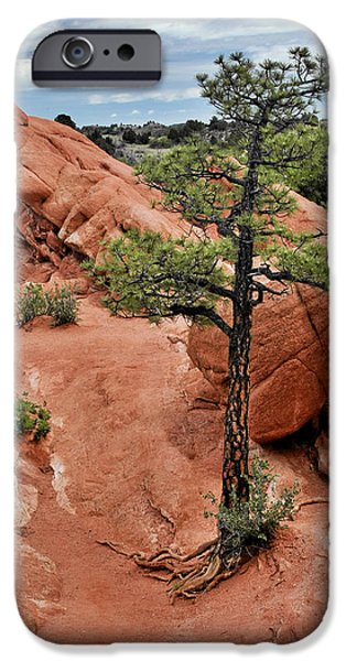 Tree Roots Photographs iPhone Cases - Garden of the Gods  - The name says it all iPhone Case by Christine Till