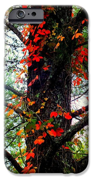 Mountain Cabin iPhone Cases - Garland of Autumn iPhone Case by Karen Wiles