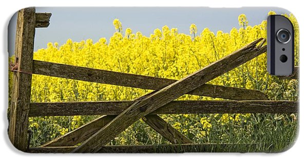 United iPhone Cases - Gate Next To A Canola Field, Yorkshire iPhone Case by John Short