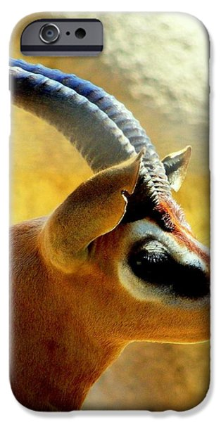 Gazelle iPhone Case by KAREN WILES