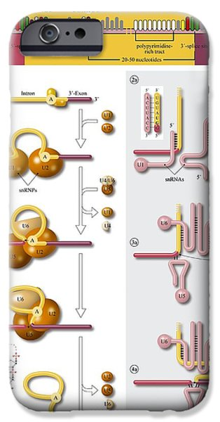 Gene Splicing, Diagram iPhone Case by Art For Science