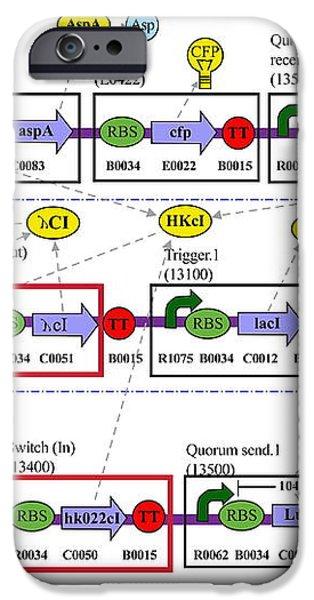 Genetic Circuit Diagram iPhone Case by Drew Endymit