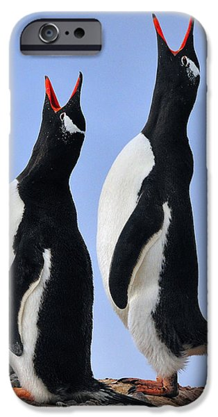 Bonding iPhone Cases - Gentoo Love Song iPhone Case by Tony Beck