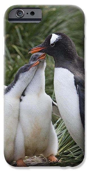 Gentoo Penguin Parent And Two Chicks iPhone Case by Suzi Eszterhas