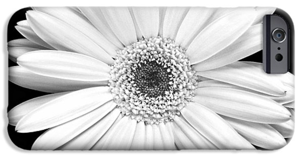 Florals Photographs iPhone Cases - Gerbera Daisy iPhone Case by Marilyn Hunt