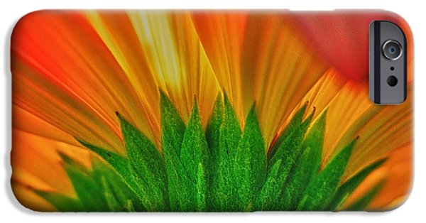 Close Up Floral iPhone Cases - Gerbera explosion iPhone Case by Stylianos Kleanthous