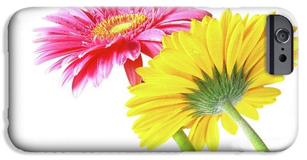 Bloom iPhone Cases - Gerbera Flowers iPhone Case by Carlos Caetano