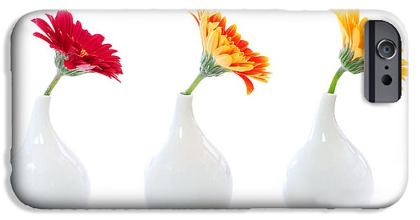 White House iPhone Cases - Gerbera flowers in vases iPhone Case by Elena Elisseeva