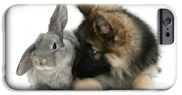 Rabbit iPhone Cases - German Shepherd And Rabbit iPhone Case by Mark Taylor