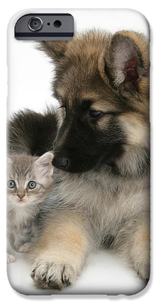 German Shepherd Dog Pup With A Tabby iPhone Case by Mark Taylor