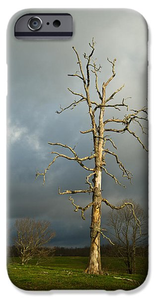 Ghastly iPhone Cases - Ghost Tree iPhone Case by Douglas Barnett