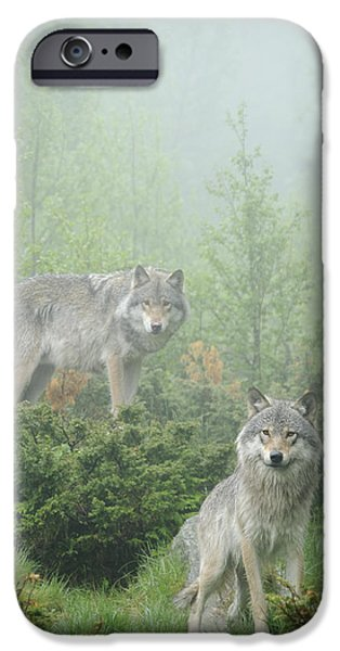 Wolf Photo iPhone Cases - Ghosts of the forest iPhone Case by Andy-Kim Moeller