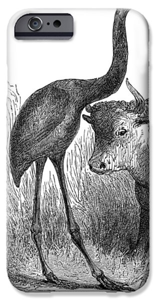 Moa iPhone Cases - Giant Moa And Prehistoric Cow, Artwork iPhone Case by