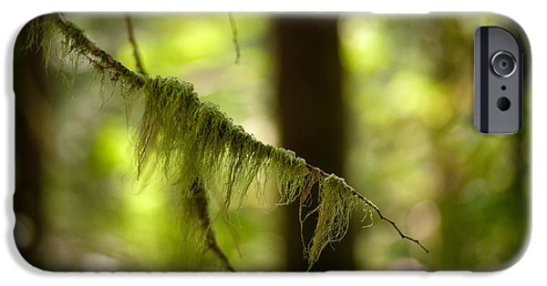 Forest Detail iPhone Cases - Gilded Branch iPhone Case by Mike Reid