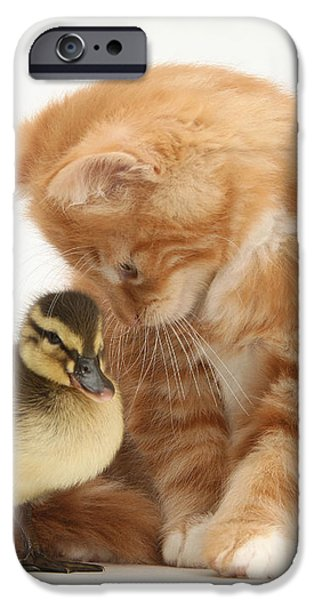 Ginger Kitten And Mallard Duckling iPhone Case by Mark Taylor