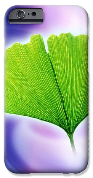 Ginkgo Leaf iPhone Case by Pasieka