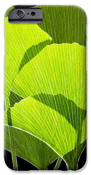 Ginkgo Leaves iPhone Case by Pasieka