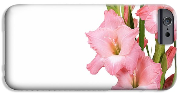 Gladiolas iPhone Cases - Gladioli on white iPhone Case by Jane Rix
