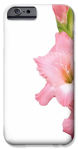 Gladioli on white iPhone Case by Jane Rix