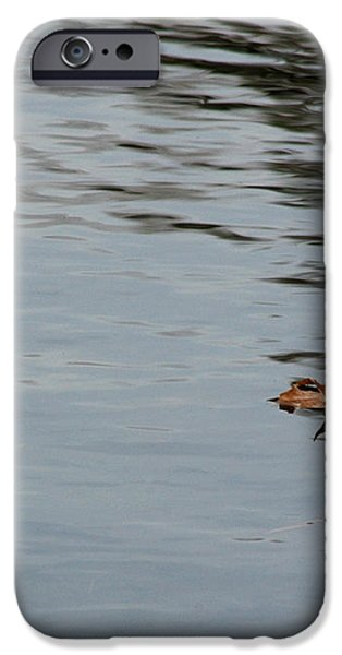 Gliding Across the Pond iPhone Case by LeeAnn McLaneGoetz McLaneGoetzStudioLLCcom