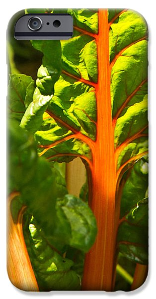 Swiss Chard iPhone Cases - Glowing Swiss Chard iPhone Case by Douglas Barnett