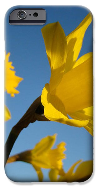 Glowing Yellow Daffodil Flowers art prints Spring iPhone Case by Baslee Troutman