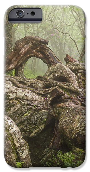 Gnarly iPhone Cases - Gnarly Old Tree in Fog Along the Blue Ridge Parkway iPhone Case by Bill Swindaman