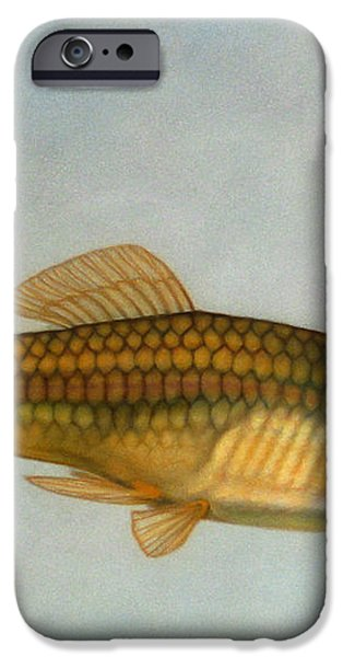 Go Fish iPhone Case by James W Johnson