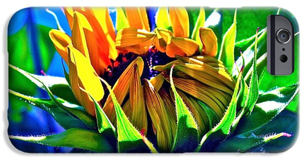 Sunflower Photograph iPhone Cases - Gods Creation iPhone Case by Gwyn Newcombe