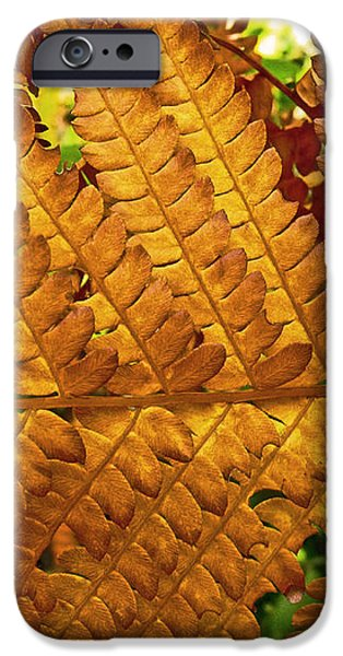 Gold Leaf iPhone Case by William Fields