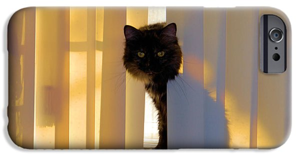 Pictures Of Cats Photographs iPhone Cases - Golden Accents iPhone Case by Cheryl Poland