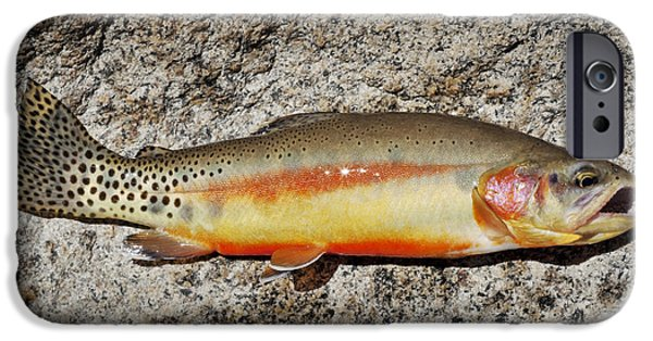 Golden Trout iPhone Cases - Golden Beauty iPhone Case by Kelley King