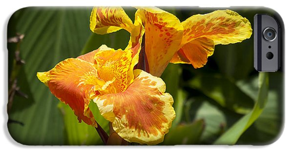 Canna iPhone Cases - Golden Canna iPhone Case by Kenneth Albin