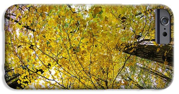 Autumn Photographs iPhone Cases - Golden Canopy iPhone Case by Rick Berk