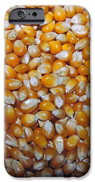 Golden Corn iPhone Case by LeeAnn McLaneGoetz McLaneGoetzStudioLLCcom