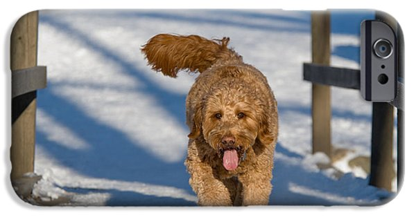 Dog Trots Photographs iPhone Cases - Golden Doodle in the snow iPhone Case by Tom Biegalski