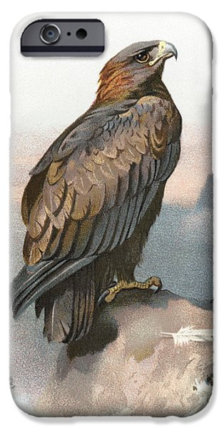 Drawing Of Eagle iPhone Cases - Golden Eagle, Historical Artwork iPhone Case by Sheila Terry