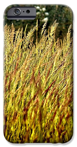 golden grasses iPhone Case by Meirion Matthias