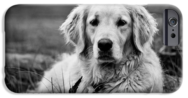 Black Dog iPhone Cases - Golden Lab iPhone Case by Cale Best