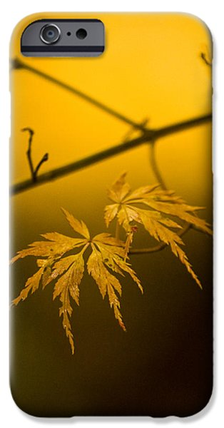 Golden iPhone Cases - Golden Leaves iPhone Case by Mike Reid