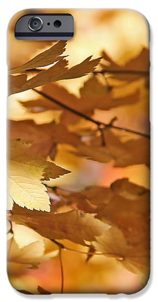 Golden Light Autumn Maple Leaves iPhone Case by Jennie Marie Schell