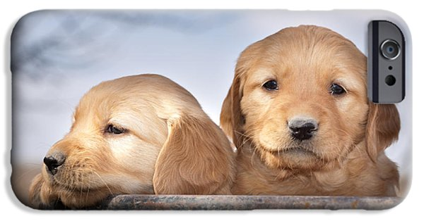 Daydreams Art Photographs iPhone Cases - Golden Puppies iPhone Case by Cindy Singleton