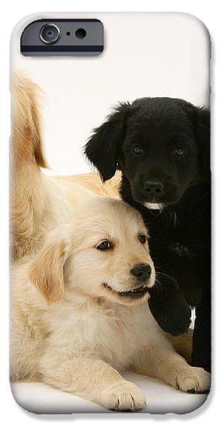 Golden Retriever And Puppies iPhone Case by Jane Burton