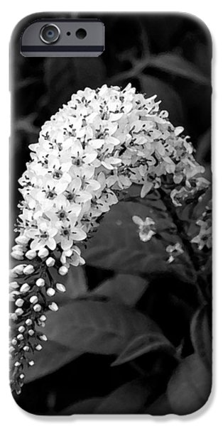 Gooseneck Loosestrife iPhone Case by Michael Friedman