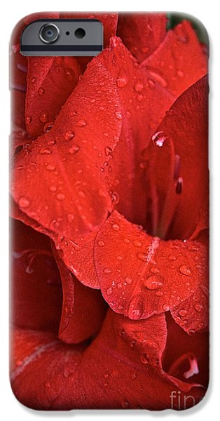 Gorgeous Glads iPhone Case by Susan Herber