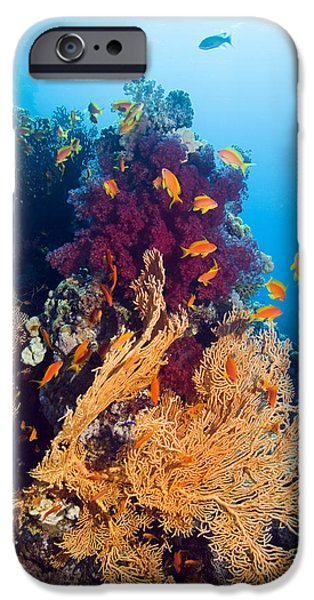 Under Water. Nature iPhone Cases - Gorgonian And Soft Coral iPhone Case by Georgette Douwma