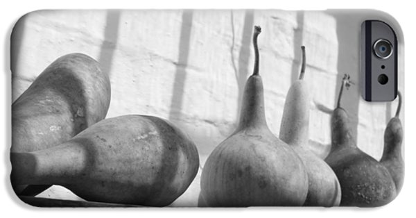 Garden Shed iPhone Cases - Gourds on a Shelf iPhone Case by Lauri Novak