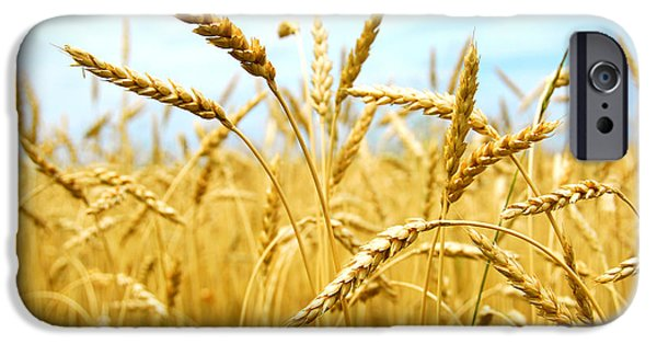 Fields iPhone Cases - Grain field iPhone Case by Elena Elisseeva
